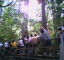 MacRitchie forest tour